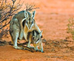 Austrália Now