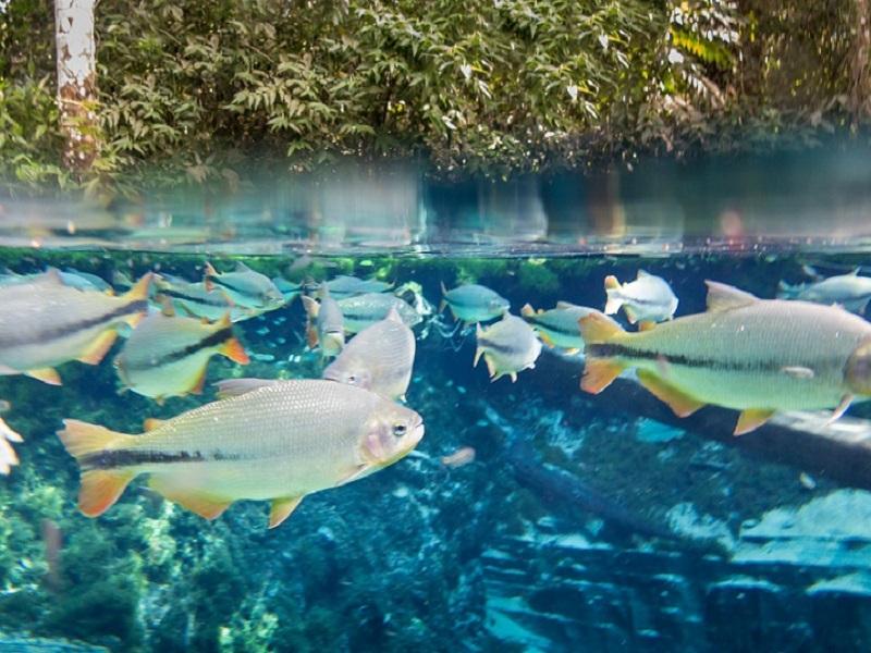 7-destinos-brasileiros-mais-procurados-para-o-ecoturismo