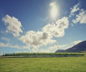 punta-rural-as-melhores-vinicolas-da-america-do-sul2