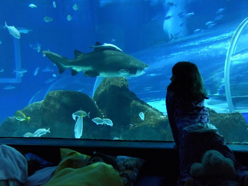 aniversario-do-aquario-de-um-ano-com-publico-recorde