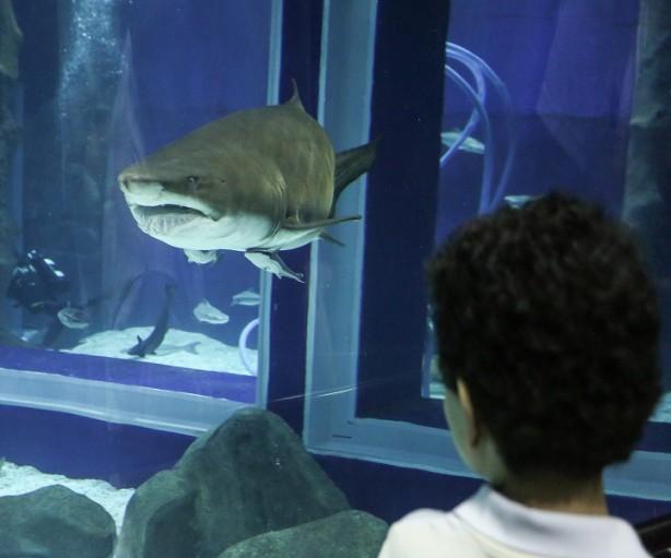 aniversario-do-aquario-de-um-ano-com-publico-recorde2