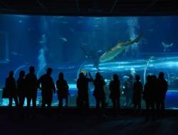 aquario-lanca-novo-programa-anual-para-socios