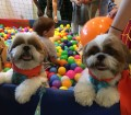 fashion-mall-tera-fim-de-semana-especial-para-os-animais