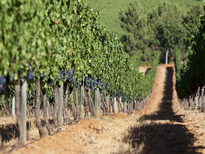 7-hoteis-com-vinicolas-para-quem-ama-beber-vinho2